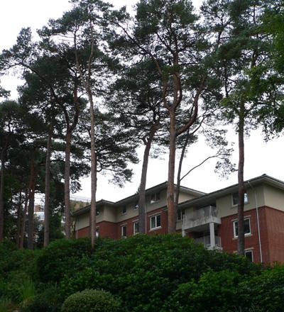 Trees & new build